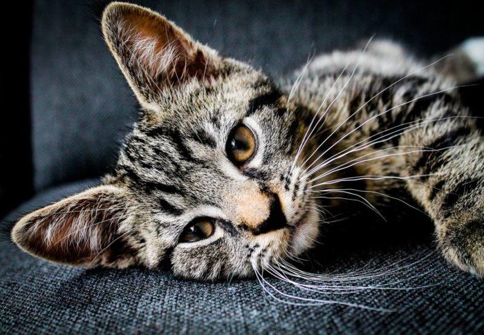 Brand pet food and comfort, cat